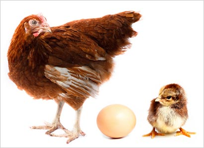 egg or chicken came first in Sri Lanka