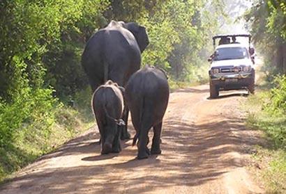 Sri Lanka mulls elephant conservation centre