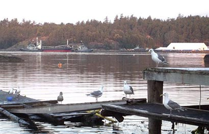 Canada hastens Sri Lanka human smuggling trial