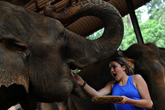 Pinnawala Elephants