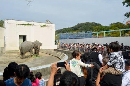 Sri Lankan elephants Anura and Kosara at the Higashiyama zoo in Nagoya, Japan.