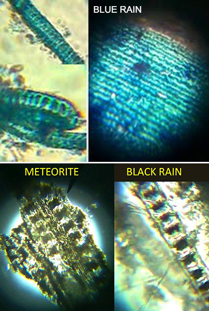 BOTH LIVE AND ANCIENT FOSSILISED DIATOMS FOUND IN TWO METEORITES THAT CRASH LANDED IN SRI LANKA SAYS CHANDRA WICKRAMASINGHE