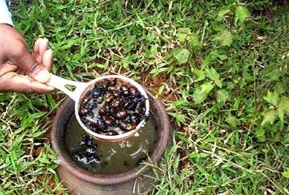 Powdered Castor Seeds (Endaru Eta) as an insecticide
