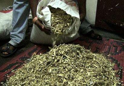 Wallapatta Herbs