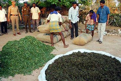 Tamilnadu ganja