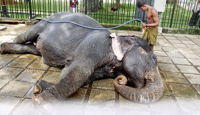 Elephant bathe