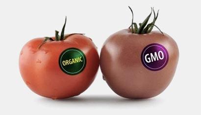 Organic Vs GMO foods