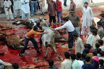 Hajj animal slaughters