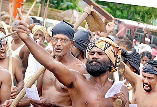Sri Lankan paddy farmer