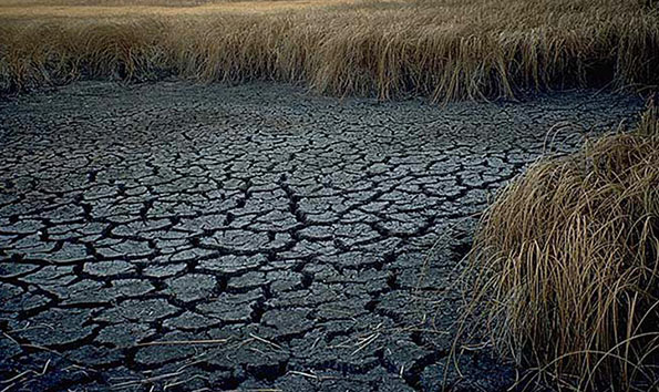 Drought Paddy