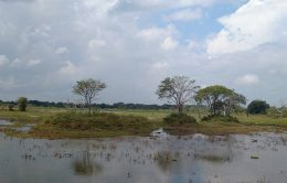 Land in Hambantota