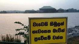Crocodiles at Parliament lake in Sri Lanka
