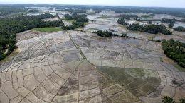Beragama Sri Lanka rice paddies
