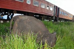 Elephants killed in collision with train in Sri Lanka