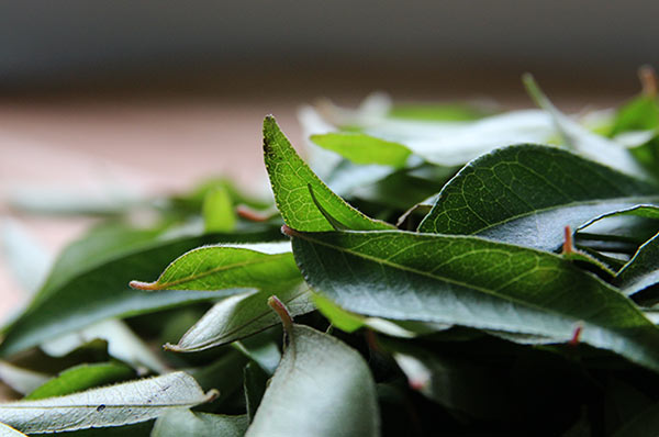 Curry leaves from Sri Lanka
