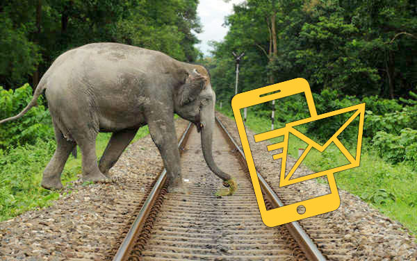 Sri Lanka railway SMS alerts to prevent elephant collisions on trains