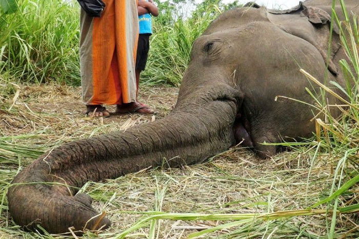 Elephant killed in Sri Lanka