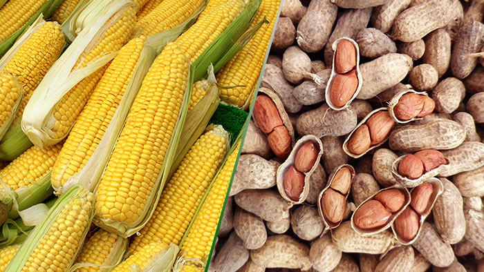 Maize and peanuts