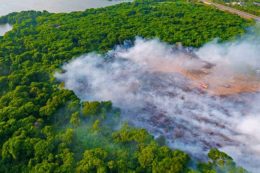 Fire in Muthurajawela reserve destroys mangroves