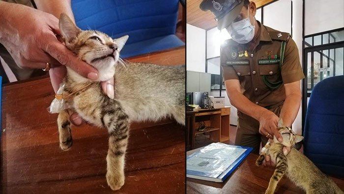 Drug trafficking heroin cat in Sri Lanka