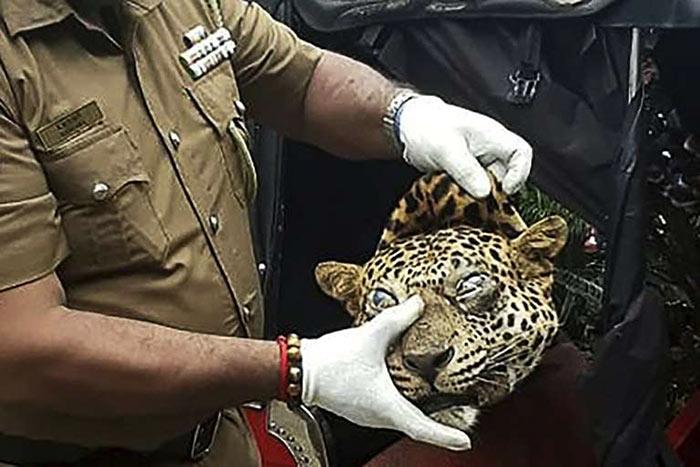 Leopard killed in Sri Lanka