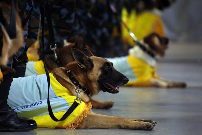 Sri Lanka Air Force sniffer dogs