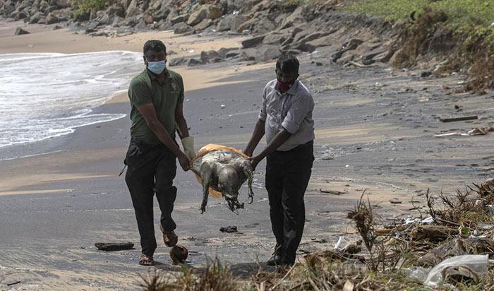Dead turtle washed ashore in Colombo Sri Lanka