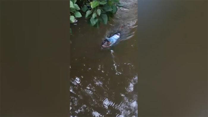 Crocodile drags a dead body along the Diyawanna Oya in Kimbulawala Sri Lanka